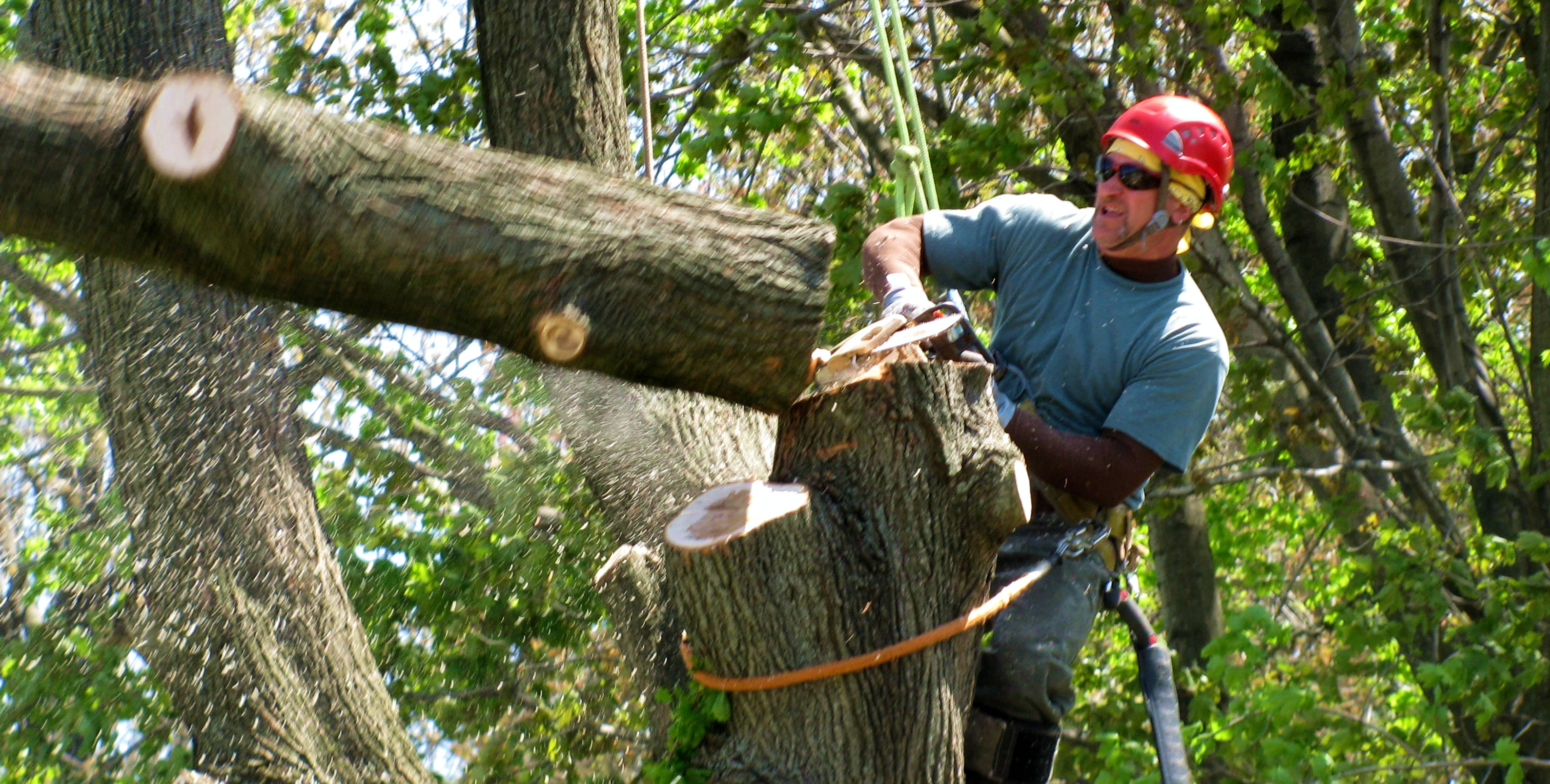 Landscape & Arborist Business Insurance